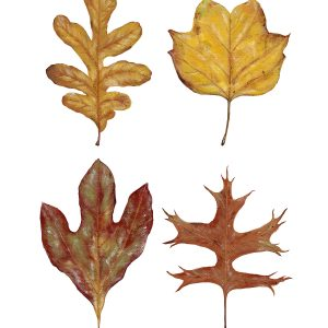 Four Leaves Art Print - Hannah Pickering