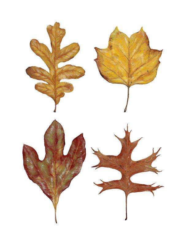 Four Leaves Art Print - Hannah Pickering