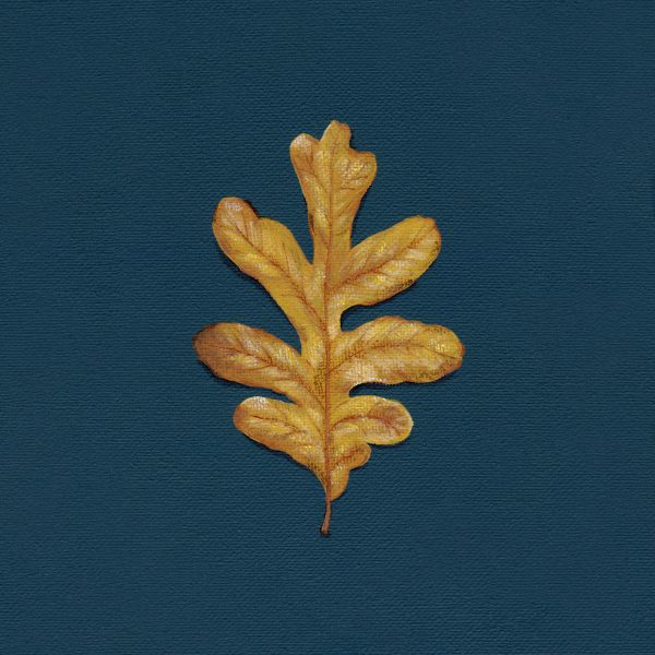 Oak Leaf Art Print - Hannah Pickering