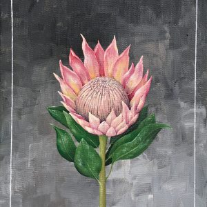 Protea - Art Print - Hannah Pickering