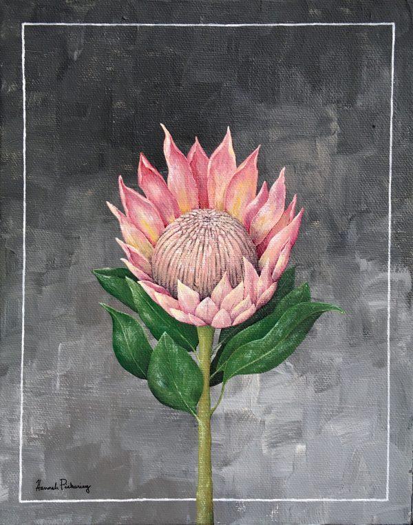 Protea - Art Print - Hannah Pickering