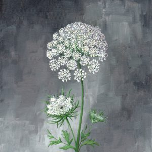 Queen Anne's Lace - Art Print - Hannah Pickering