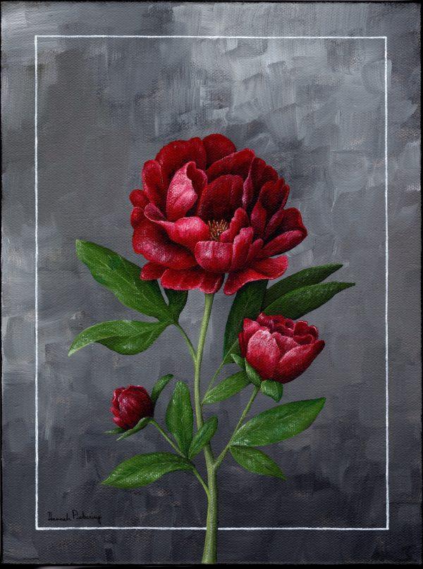 Red Peony - Hannah Pickering